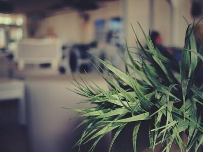 Procurez-vous une plante d'intérieur