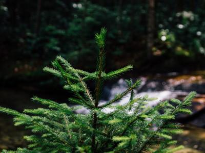 Les forêts au Québec