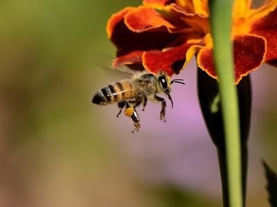 Garder les abeilles en santé
